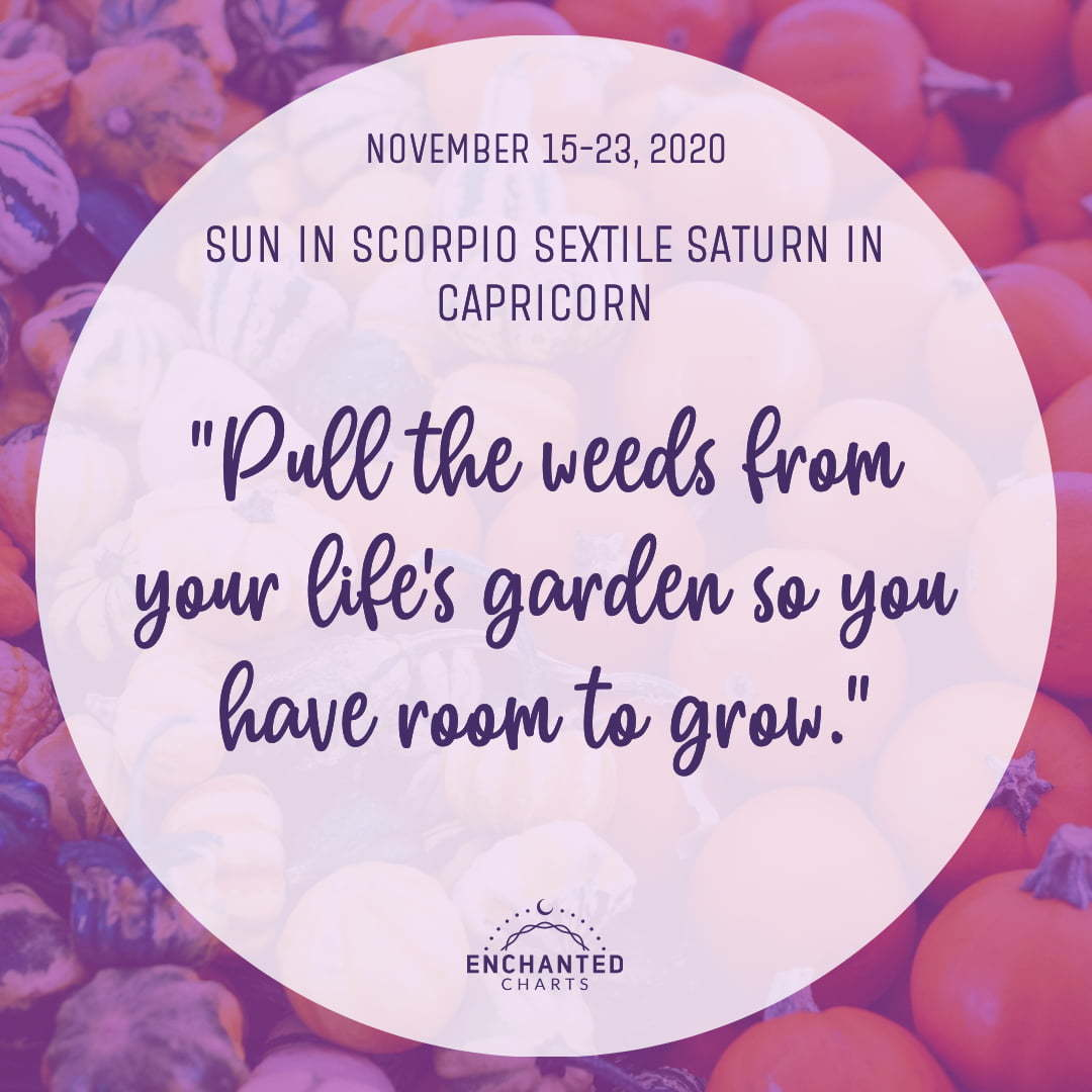 Horoscope:  Pull the weeds from your life's garden so you have room to grow.